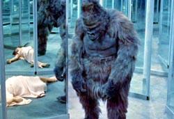 gorillalarge1